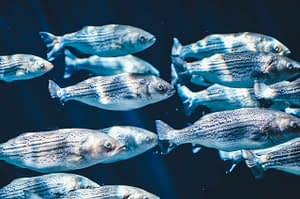 animals, fish, swarm